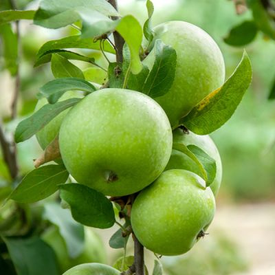 Apple Green Food Flavour - Flavor Westb