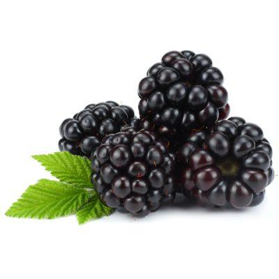 Blackberry Food Flavour - The Flavor Apprentice