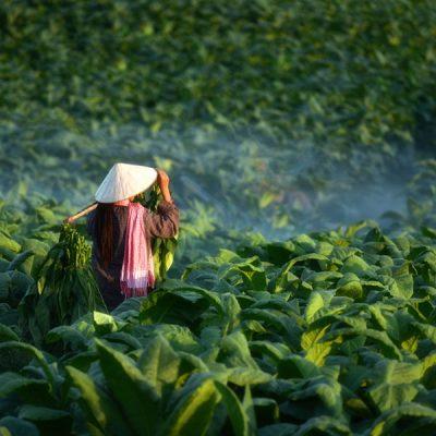 Oriental Tobacco Food Flavour - Flavor West