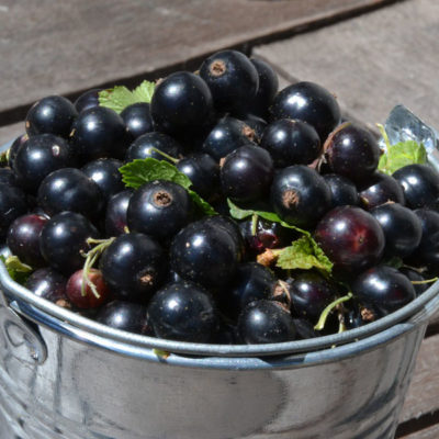 Black Currant Food Flavour