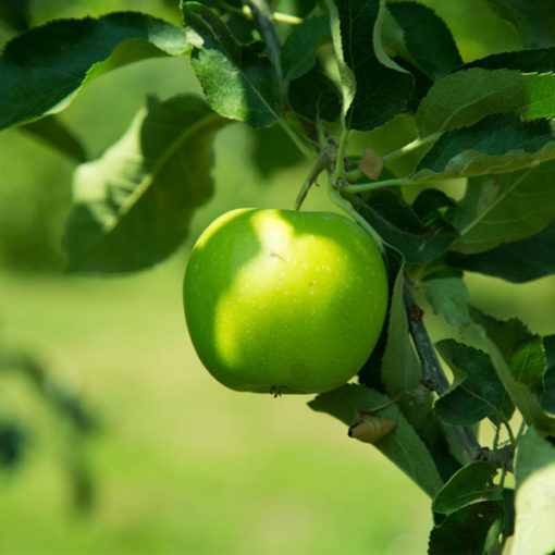 Green Apple Food Flavour